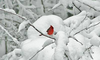 Photograph - Winter's Way by Barbara S Nickerson