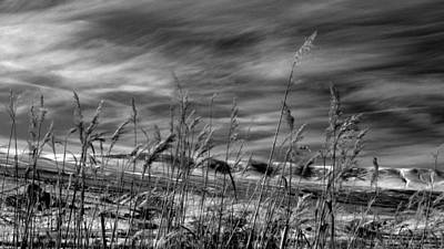 Art Print featuring the photograph Winters Wheat by Al Swasey