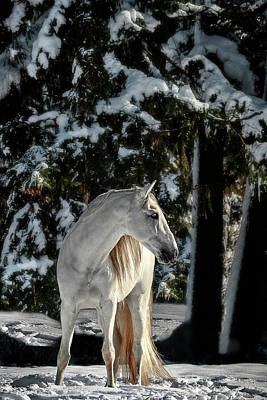 Photograph - Winters White Stallion by Wes and Dotty Weber
