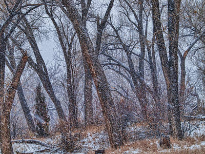 Photograph - Winter's Woods by Alana Thrower