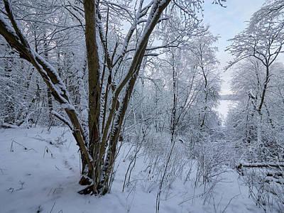 Photograph - Winterscene 1 by Jouko Lehto