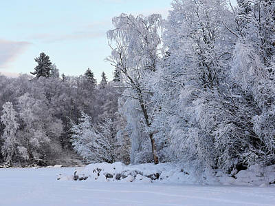 Photograph - Winterscene 10 by Jouko Lehto