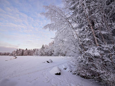 Photograph - Winterscene 4 by Jouko Lehto