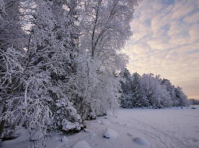 Photograph - Winterscene 8 by Jouko Lehto