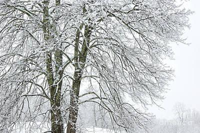 Wintertime In West Virginia Art Print by Thomas R Fletcher