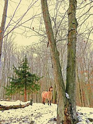 Photograph - Wintertime Moment by Patricia Keller