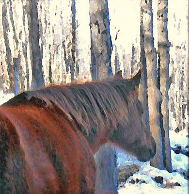 Horses Photograph - Wintertime Moments With The Paso Fino Mare by Patricia Keller