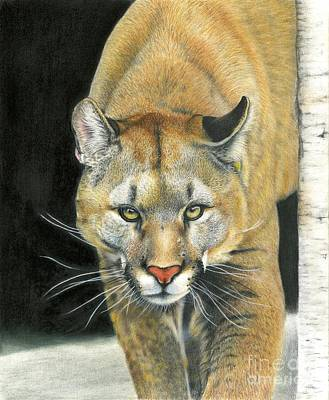Painting - Wintertime Prowler by Barb Schacher