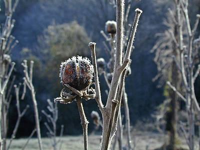 West Fork Photograph - Wintery Begining by Douglas Barnett