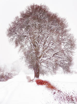 Photograph - Wintery County Road by Dee Browning