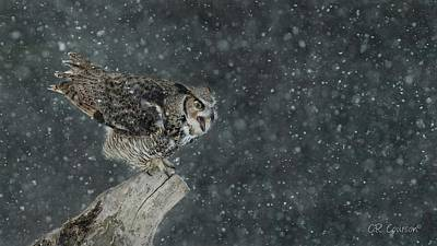 Photograph - Wintery Great Horned Owl by CR Courson