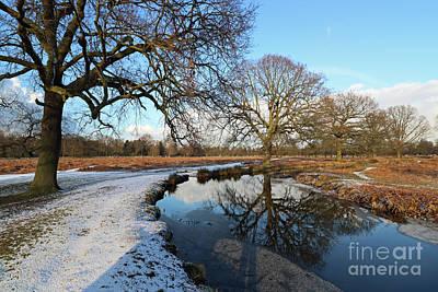 Photograph - Wintery Scene At Bushy Park London by Julia Gavin