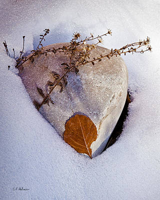 Photograph - Wintery Still Life by Christopher Holmes