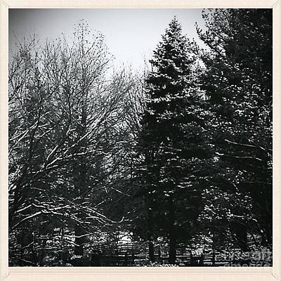 Frank J Casella Royalty-Free and Rights-Managed Images - Wintery Woods  by Frank J Casella