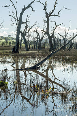 Photograph - Winton Wetlands by Linda Lees