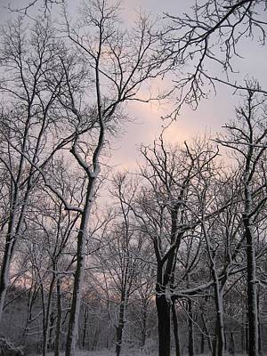 Photograph - Wintry Dusk by Dylan Punke
