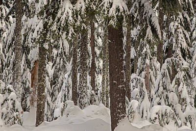 Photograph - Wintry Forest by Kunal Mehra