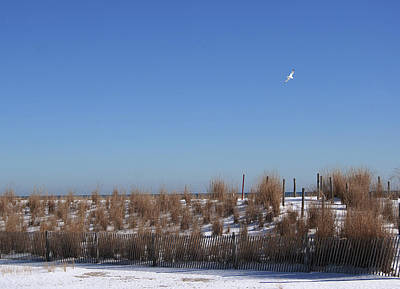 Photograph - Wintry Sand Dunes  by Margie Avellino