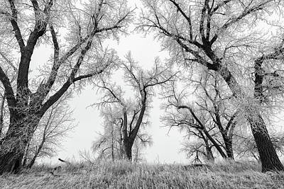 Photograph - Wintry Trees On The Plains by Tony Hake
