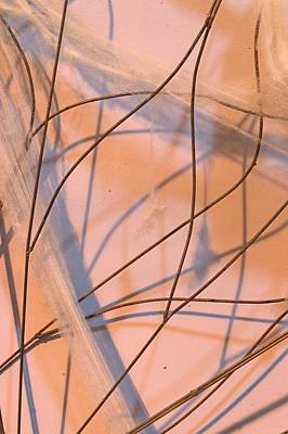 Photograph - Wire Abstract by Mike McCool