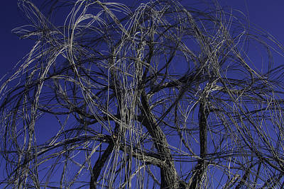Wire Tree Photograph - Wire Tree by Garry Gay