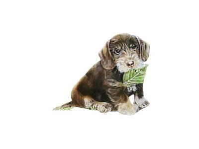 Dachshund Puppy Drawing - Wirehaired Dachshund by Linda Zielinski