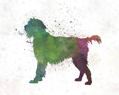 Griffon Painting - Wirehaired Pointing Griffon Korthals In Watercolor by Pablo Romero