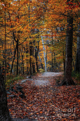 Photograph - Wisconsin Autumn by Jarrod Erbe