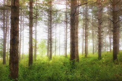 Wisconsin Forest Art Print