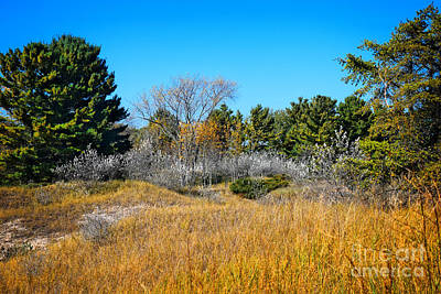 Wisconsin Kohler Andrae State Park Art Print by Mary Machare