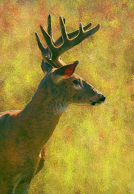 Bucking Bull Painting - Wisconsin White Tail Buck by Jack Zulli