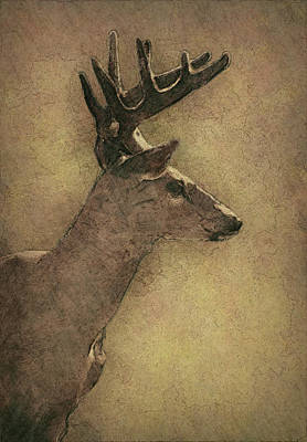 Bucking Bull Painting - Wisconsin White Tail Buck Sketch by Jack Zulli
