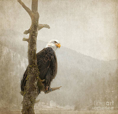 Eagle Photograph - Wisdom by Beve Brown-Clark Photography