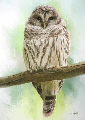 Painting - Wisdom Listens - Barred Owl Art by Jordan Blackstone