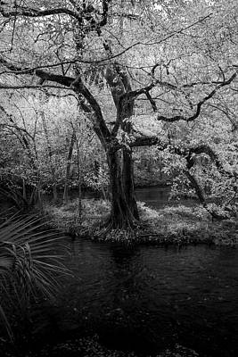 Overhang Photograph - Wisdom Of A Tree by Marvin Spates