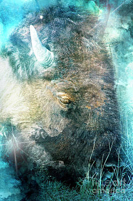 Photograph - Wise Beast by Janie Johnson