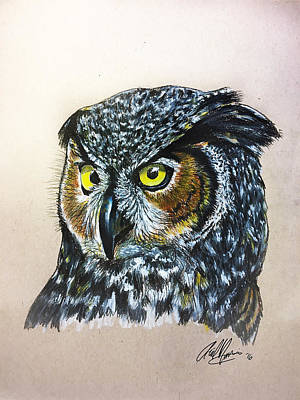 Great Horned Owl Drawing - Wise Eyes by Ariel Nicolosi