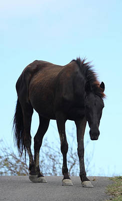 Horse Photograph - Wise Horse by The Art Of Marilyn Ridoutt-Greene