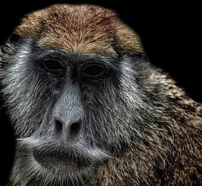 Evolution Photograph - Wise by Martin Newman