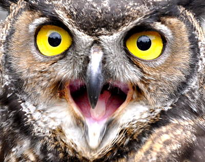 Photograph - Wise Mr. Owl by Caroline Reyes-Loughrey