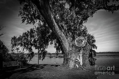 Photograph - Wise Old Oak by Dale Powell