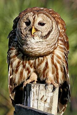 Photograph - Wise Old Owl by Ira Runyan