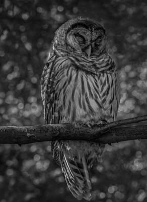 Photograph - Wise Old Owl by Jacqui Boonstra