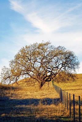Wise Old Tree Print by Aron Kearney
