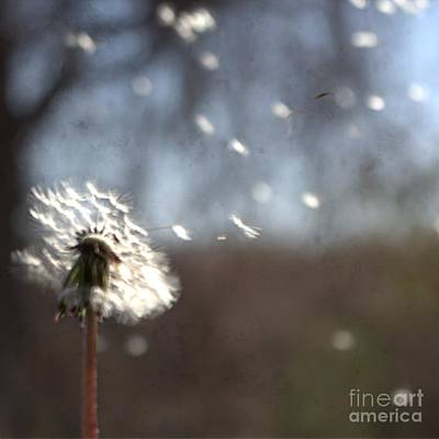 Photograph - Wish I Could Fly by Ella Kaye Dickey