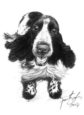 Cocker Spaniel Drawing - Wish Lady by Renata Clare