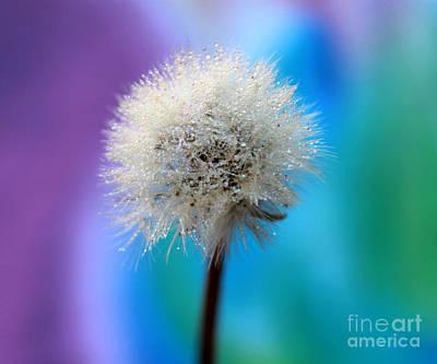 White Flower Photograph - Wish Of Fairytales by Krissy Katsimbras