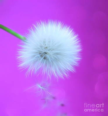 Purple Digital Art - Wish Of Summer by Krissy Katsimbras