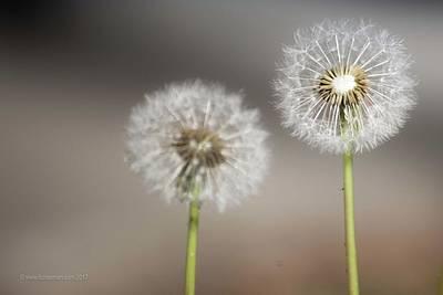 Photograph - Wish On Me by Lora Lee Chapman