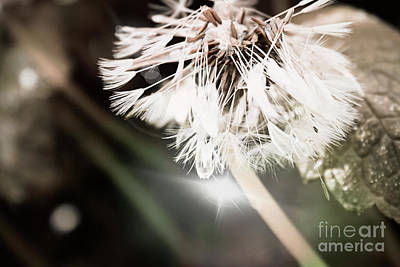 Photograph - Wishes And Dreams by Janie Johnson